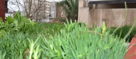 Techos verdes ley en la ciudad
